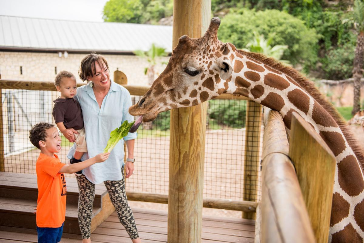 San Antonio Zoo has active wildlife conservation and education programmes / San Antonio Zoological Society