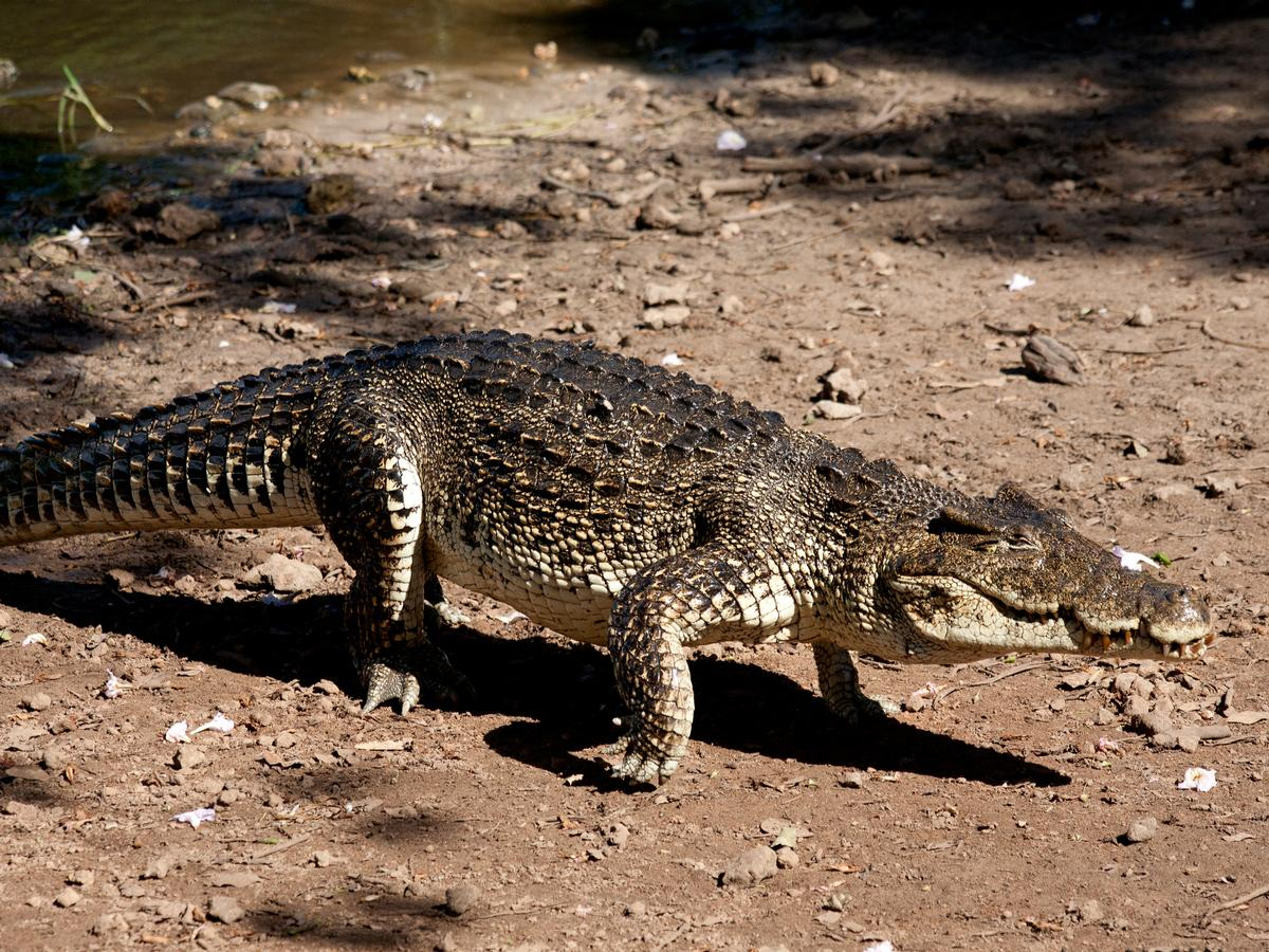 The new amphibian and reptile conservation campus (ARCC) will stretch across 2.5 acres and will also allow for a new species of Cuban crocodiles to live at the zoo / Shutterstock.com