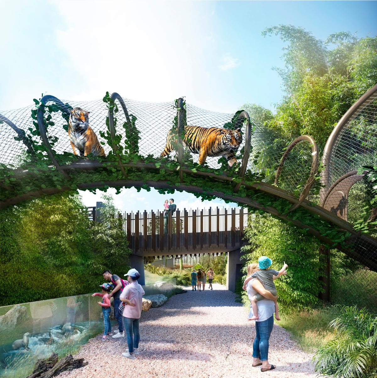 The lowland habitat includes elevated vantage points for tigers / Auckland Zoo