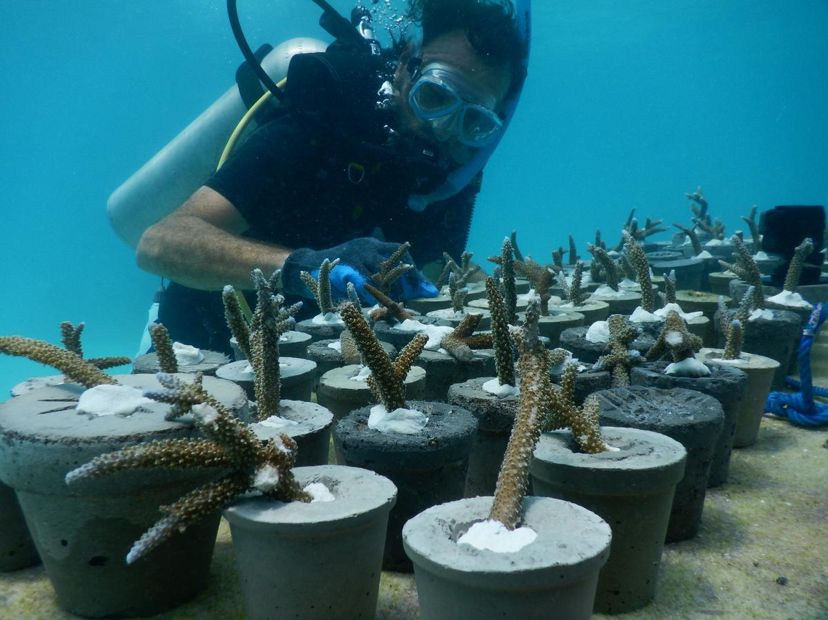 The Australian Institute of Marine Science is collaborating on the development / Jason deCaires Taylor