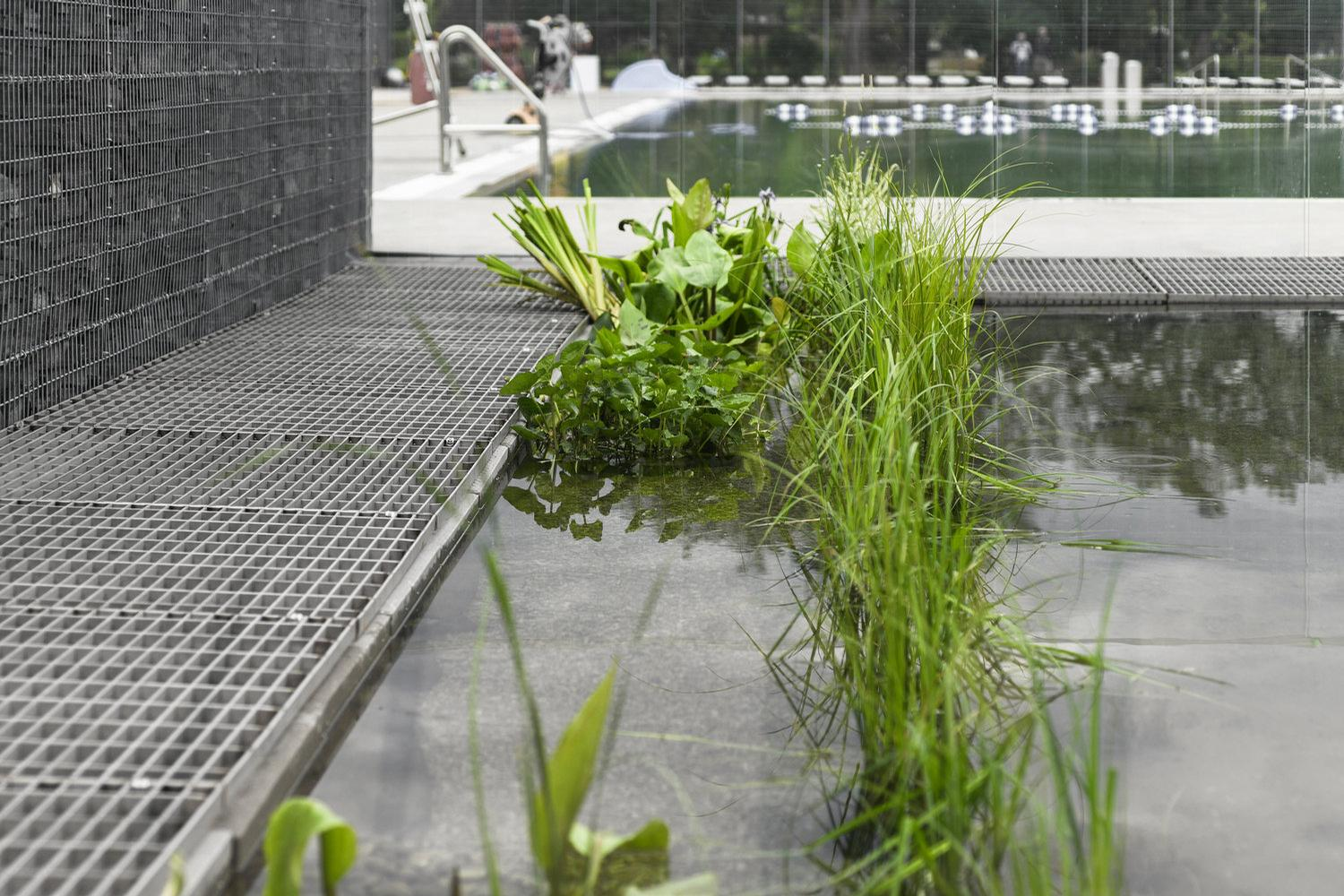 Plants and microscopic organisms as well as sand and gravel clean the water of impurities introduced by humans / gh3 architecture