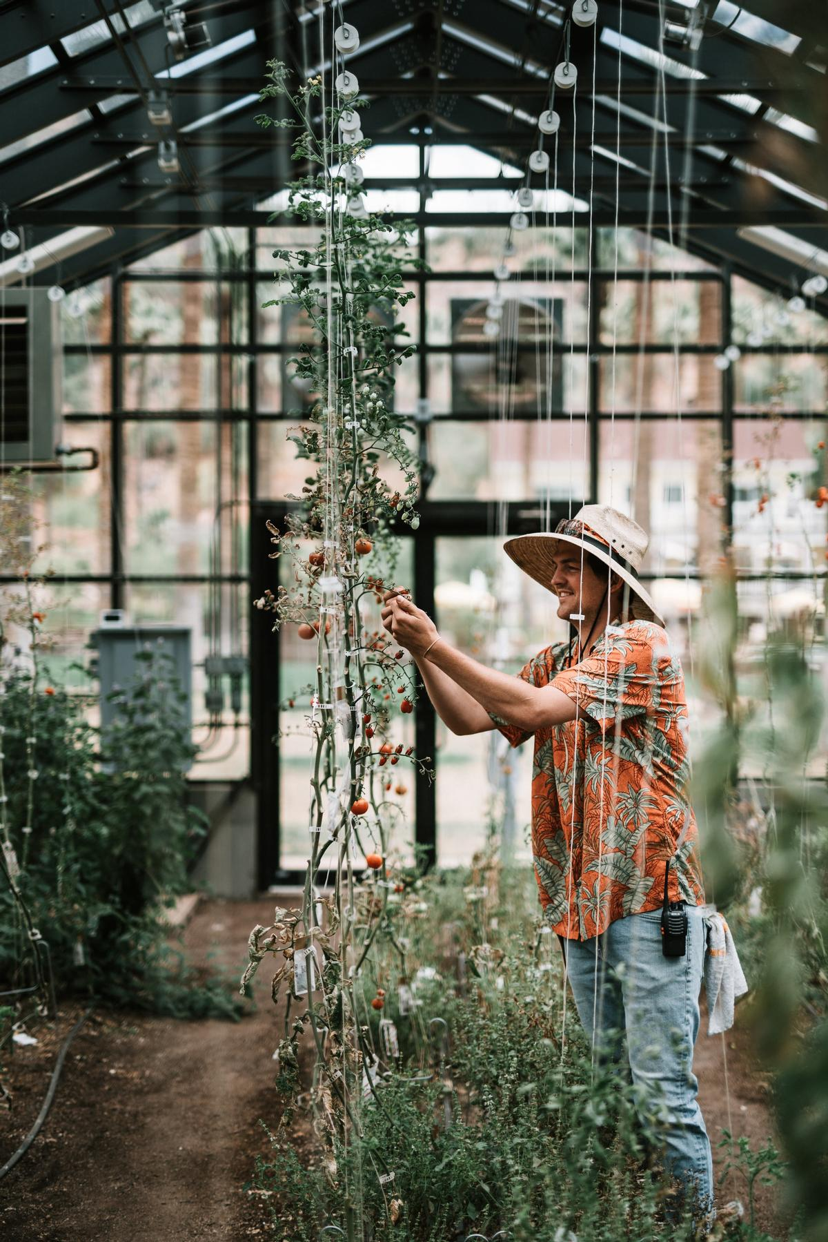 At the property's greenhouse and one-acre farm, more than 150 varieties of fruits and vegetables (including over 30 varieties of heirloom tomatoes) native to the desert are grown / Castle Hot Springs
