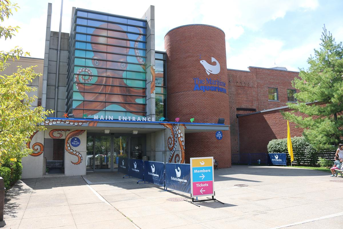 The aquarium is among Connecticut's most-visited tourist attractions / The Maritime Aquarium