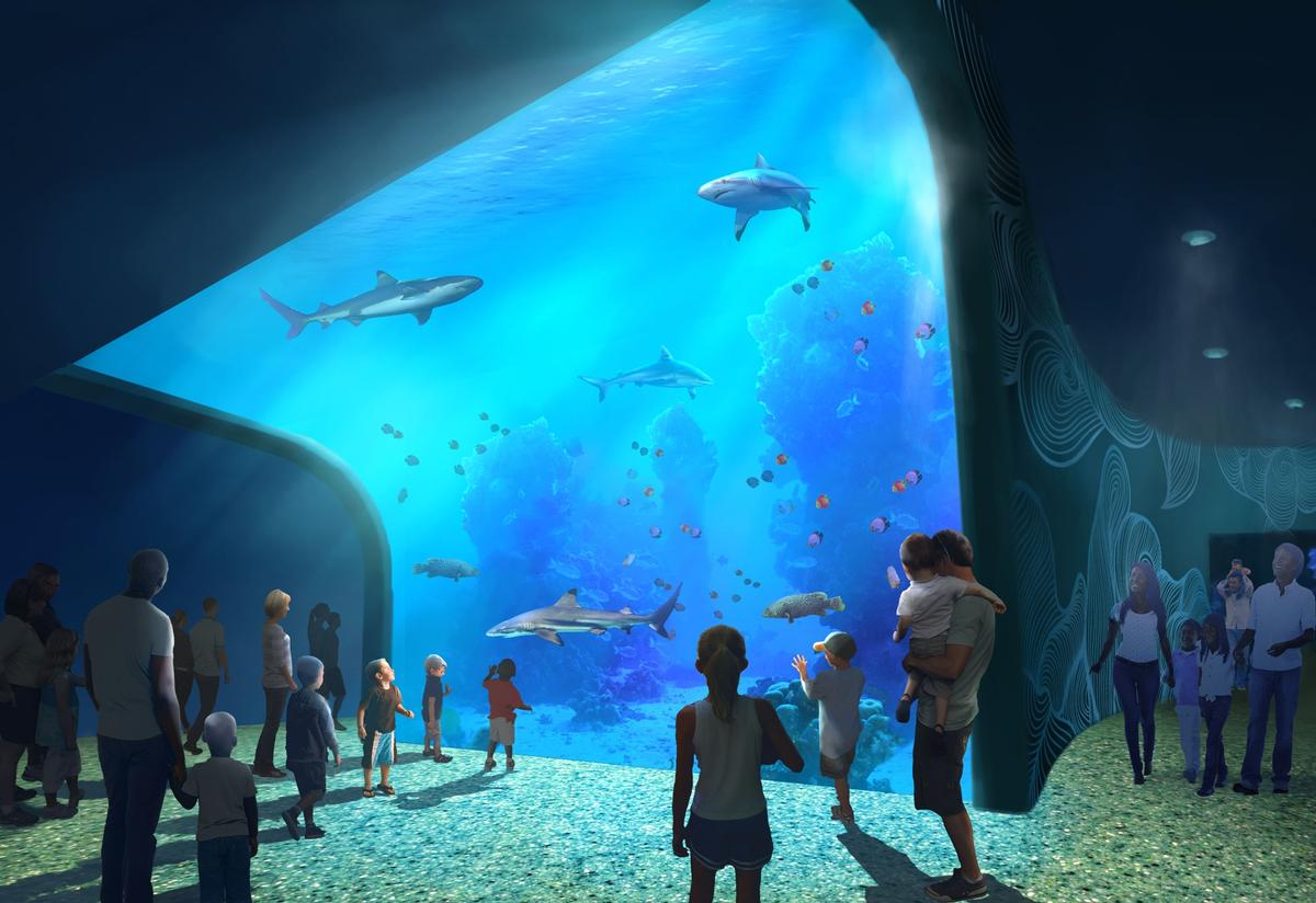 A shark and stingrays tank has J walls that curve over guests heads / St. Louis Aquarium / PGAV Destinations