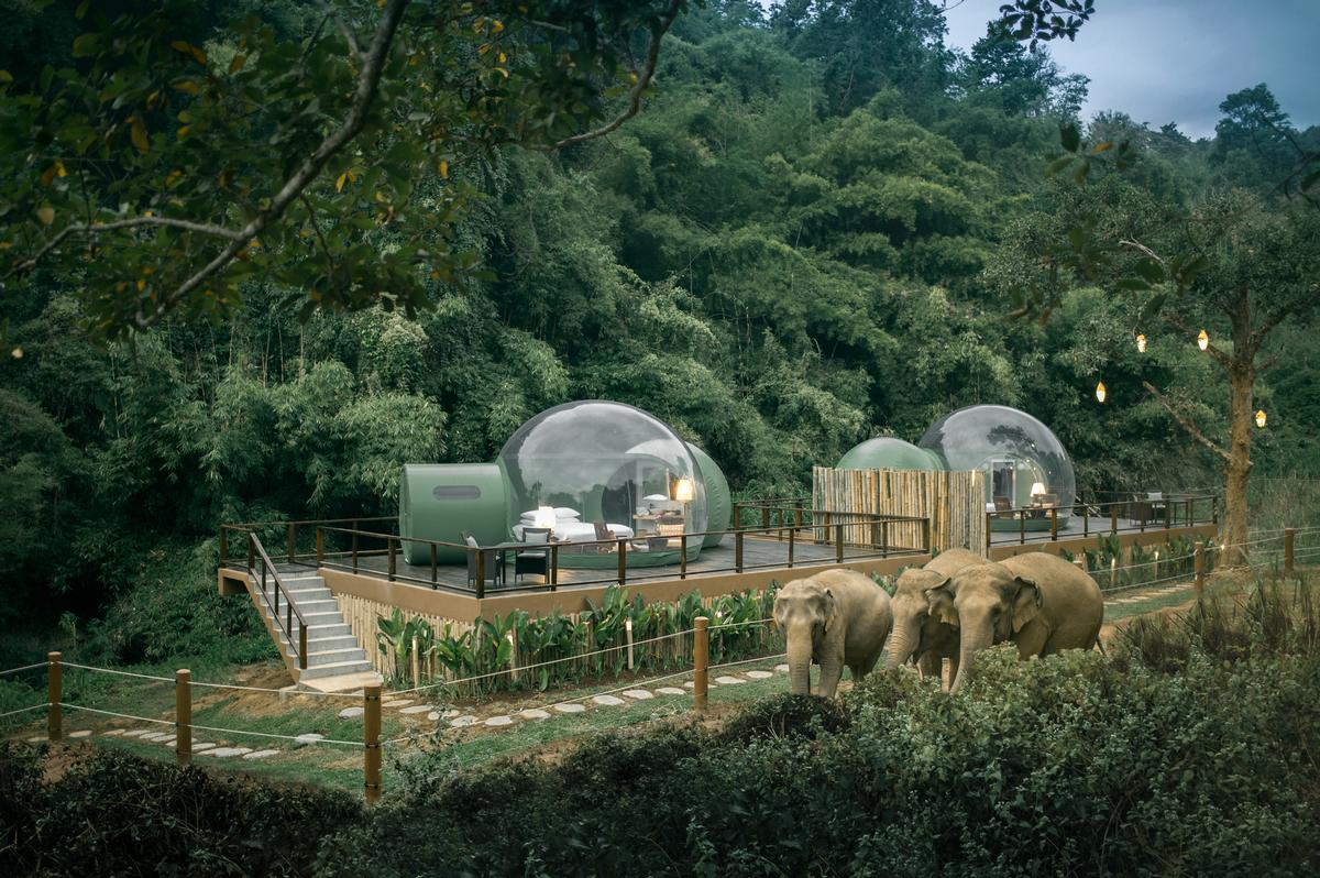 Eye In The Sky's Jungle Bubbles put the elephants outside the room