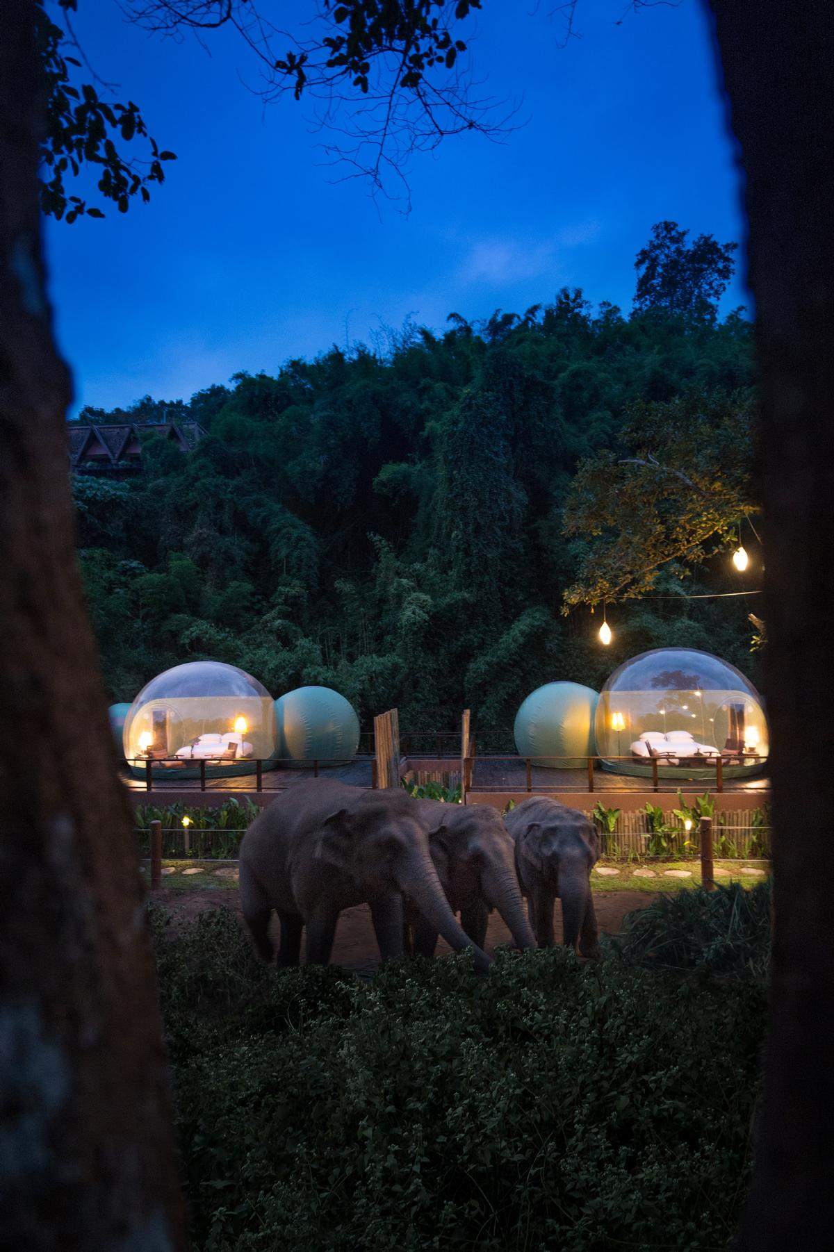 They house a fully air-conditioned bedroom and living space with a kingsize bed, a seating area, and an en-suite shower and a vanity space / Anantara Golden Triangle Elephant Camp & Resort