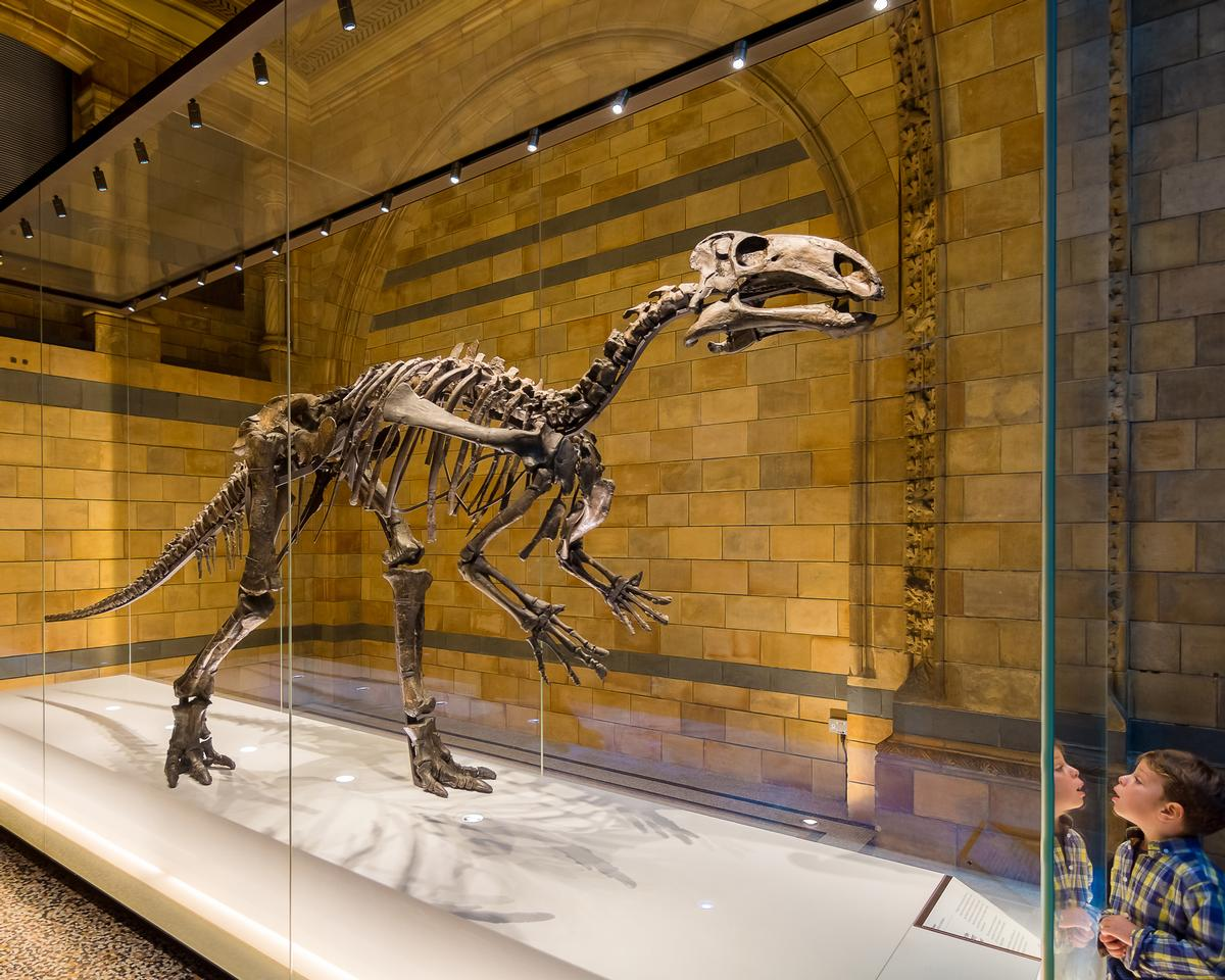 A new dinosaur gallery that will educate guests on biodiversity, extinction and climate change is planned