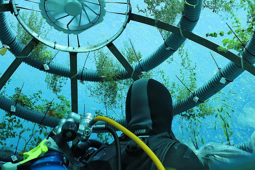 OceanReef's Nemo's Garden underwater farming concept