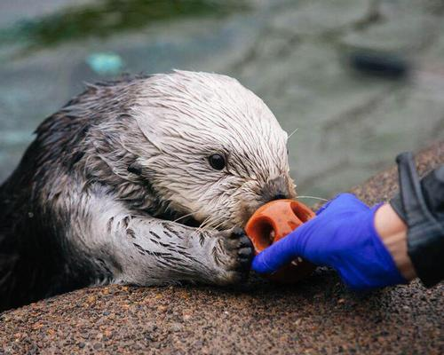 Oregon Coast Aquarium to develop new conservation facility for sick or injured animals