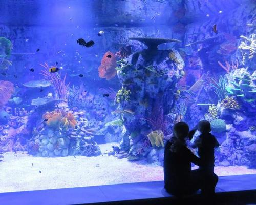 The immersive trip then takes visitors through the aquarium, where they can see over 150 different species in their natural ecosystems