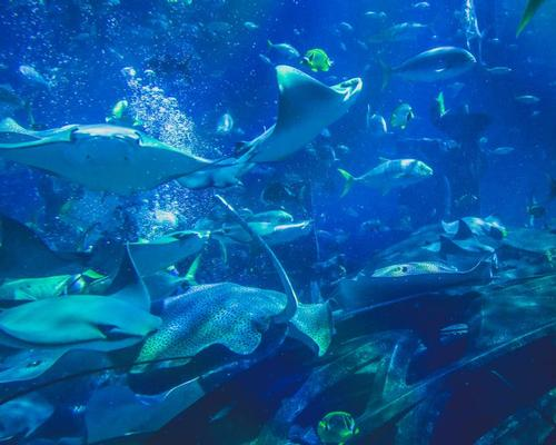 Twin Cities shopping centre to get new SeaQuest aquarium