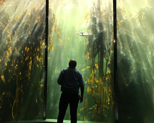 Cape Town's Two Oceans Aquarium completes major renovations