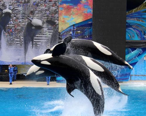 PETA buys stake in TUI to protest SeaWorld ties