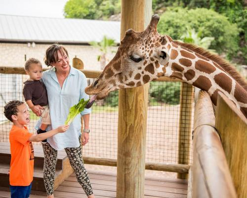 San Antonio Zoo has active wildlife conservation and education programmes