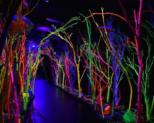 Meow Wolf are an art collective known for their highly colourful, eye-catching immersive installations