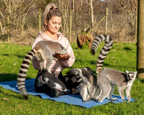 Lemurs have a very calming effect on humans and can lower blood pressure and reduce stress
