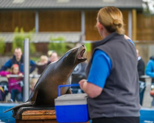 The sea lion enclosure is one of Blair Drummond's most popular attractions / Blair Drummond Safari Park