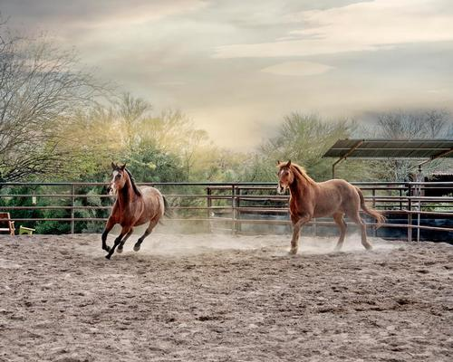 The retreat is women-only equine and is running from 8-10 November.
