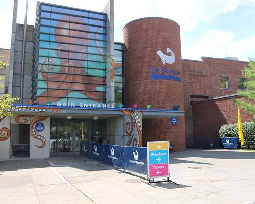 Connecticut aquarium starts work on new seal display and 4D theatre